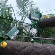 Mobile Coconut Tree Climb Timers at Armando