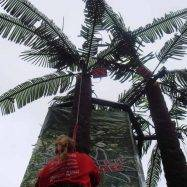 Mobile Coconut Tree Climb Timers